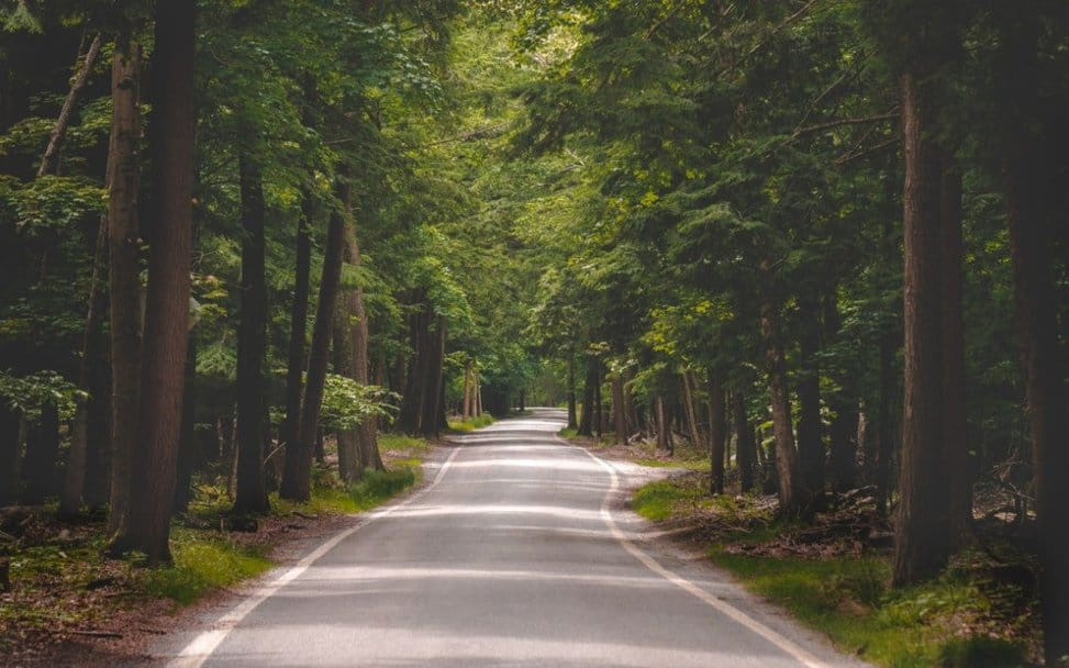 Tunnel of trees - Motorcycle best roads to travel